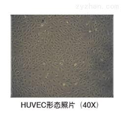 allcells脐静脉内皮细胞(HUVEC)