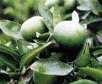四川轩禾康生物科技有限公司  橙皮甙